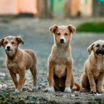 बेकार नहीं हैं सड़क के कुत्ते, जहां करोड़ों रुपए की सैटेलाइट फेल हुई वहां पास हुए स्ट्रीट डॉग